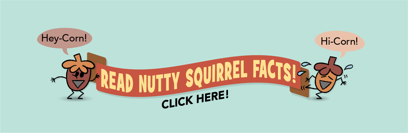 Read Nutty Squirrel Facts